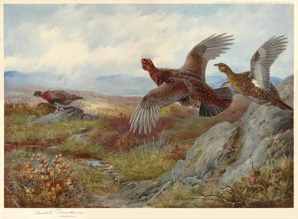 Archibald Thorburn Grouse Over the Moor