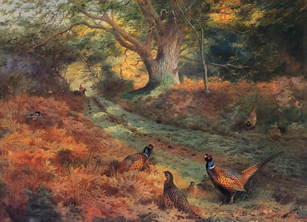Archibald Thorburn The Bridle Path