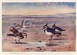Archibald Thorburn Lapwing and Golden Plover painting
