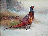 Archibald Thorburn Old English Pheasant painting