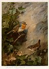 Archibald Thorburn Robin and Wren painting