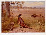 Archibald Thorburn The Old and the New painting