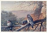 Archibald Thorburn Wood Pigeons in Beech Tree painting