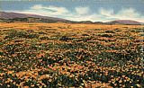 A Field of Californian Poppies