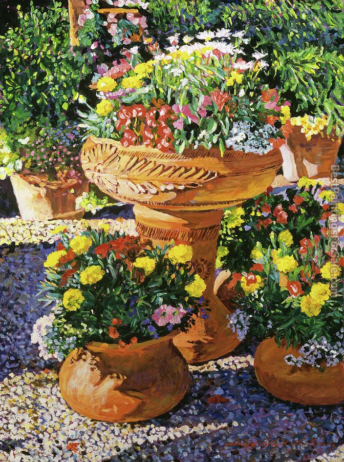 David Lloyd Glover Flower Pots in Sunlight