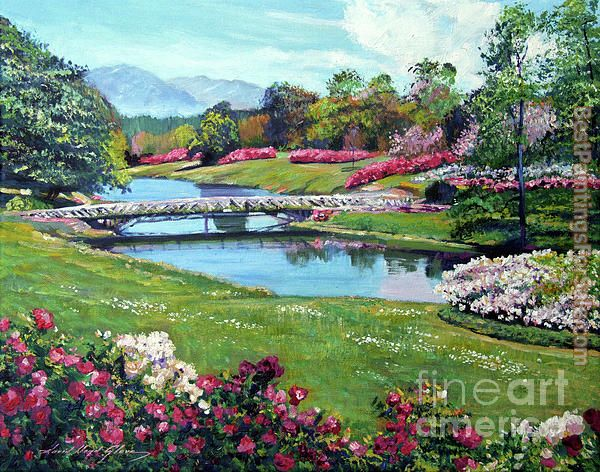 David Lloyd Glover Spring Flower Park