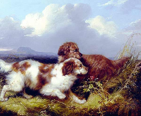 George Armfield Spaniels Flushing Game