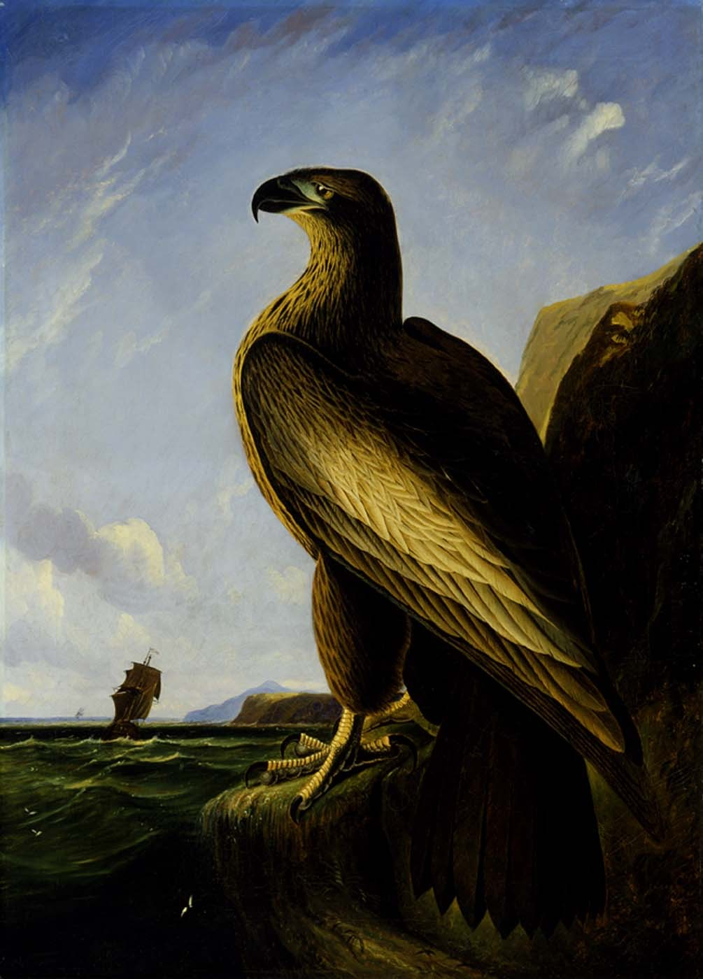 John James Audubon Washington Sea Eagle