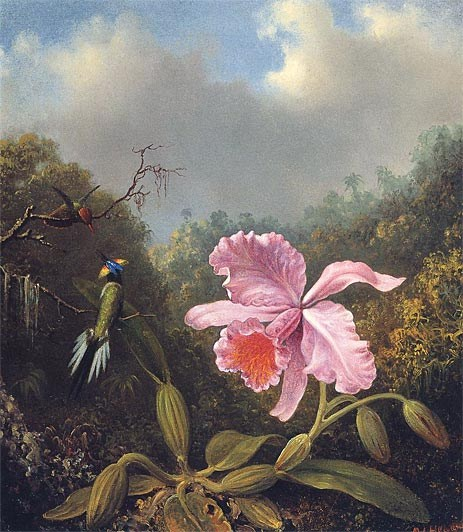 Martin Johnson Heade Fighting Hummingbirds with Pink Orchid