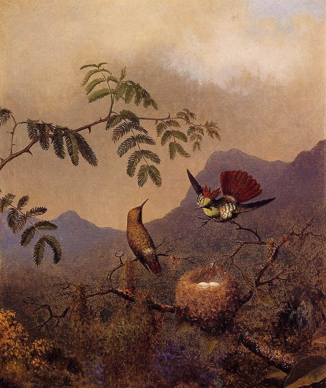 Martin Johnson Heade Frilled Coquette