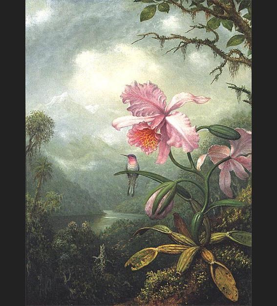 Martin Johnson Heade Hummingbird Perched on an Orchid Plat