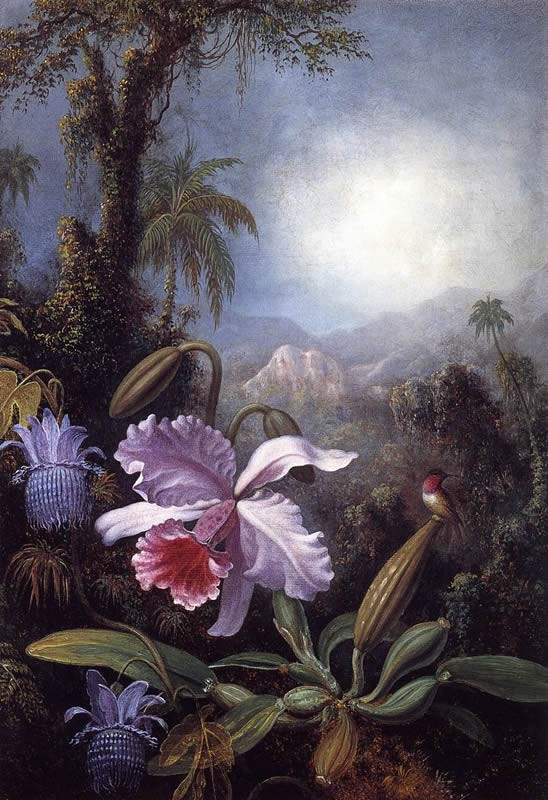 Martin Johnson Heade Orchids, Passion Flowers and Hummingbird