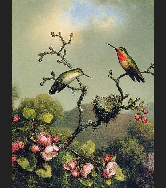Martin Johnson Heade Ruby Throat of North America