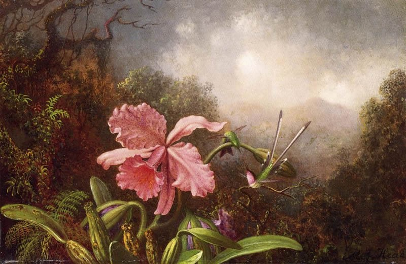 Martin Johnson Heade Two Hummingbirds by an Orchid
