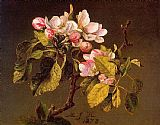 Martin Johnson Heade Apple Blossoms painting