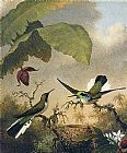 Martin Johnson Heade Black-Eared Fairy painting