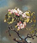 Martin Johnson Heade Branch of Apple Blossoms against a Cloudy Sky painting