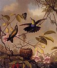 Martin Johnson Heade Fort-Tailed Woodnymph painting