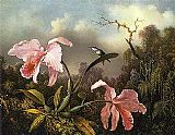 Orchids and Hummingbird 2