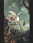 Martin Johnson Heade White Brazilian Orchid painting