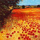 Mediterranean paintings - Field of Red and Gold by Steve Thoms