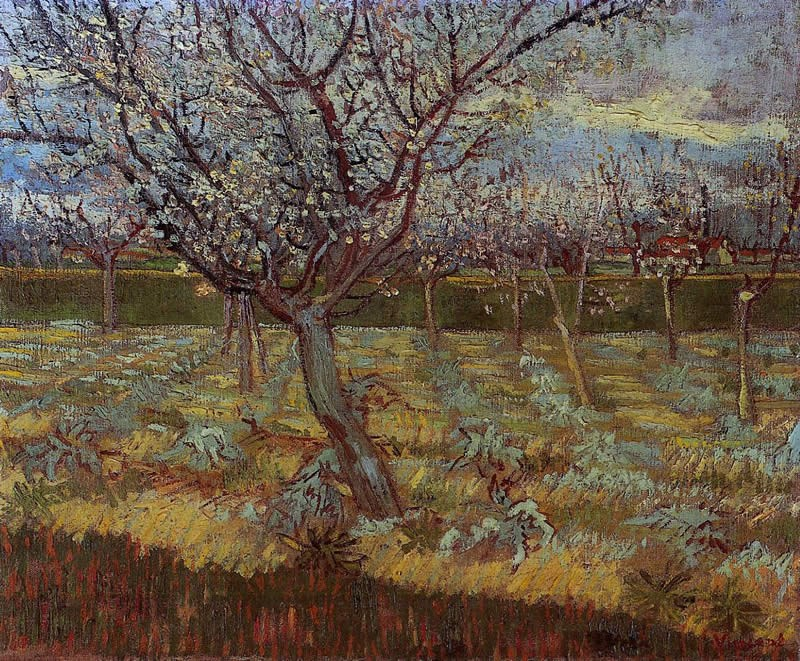 Vincent van Gogh Apricot Trees in Bloom
