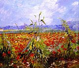 A Field With Poppies