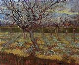 Vincent van Gogh Apricot Trees in Bloom painting