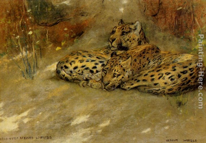 Arthur Wardle Study Of East African Leopards