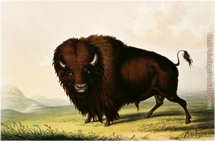George Catlin Paintings for sale