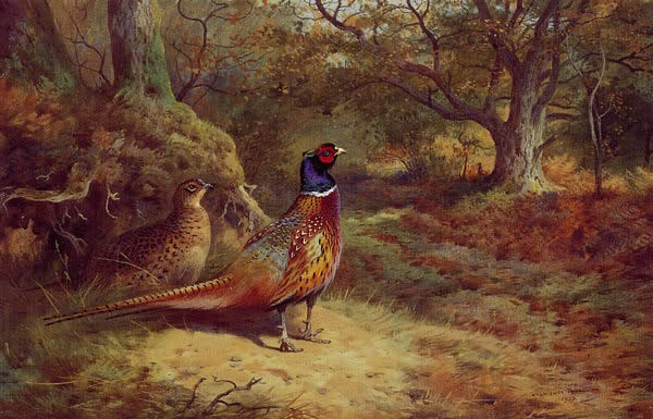 Archibald Thorburn On the Alert