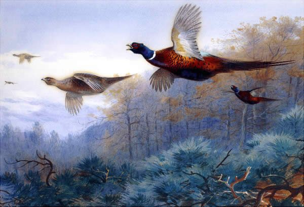 Archibald Thorburn Pheasants in Flight