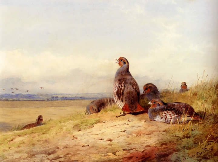 Archibald Thorburn Red Partridges