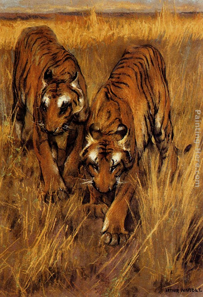 Arthur Wardle Tigers