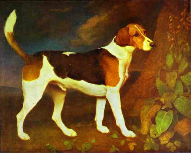 George Stubbs A Foxhound,Ringwod