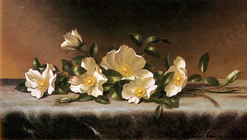 Martin Johnson Heade Cherokee Roses On A Light Gray Cloth