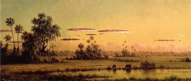 Martin Johnson Heade Florida Sunset with Two Cows