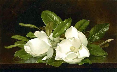 Martin Johnson Heade Magnolias on a Wooden Table