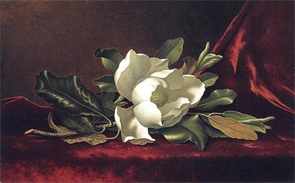 Martin Johnson Heade The Magnolia Blossom