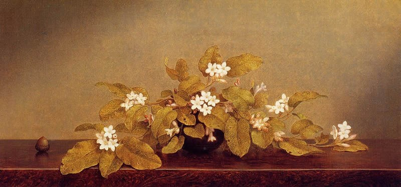 Martin Johnson Heade Trailing Arbutis