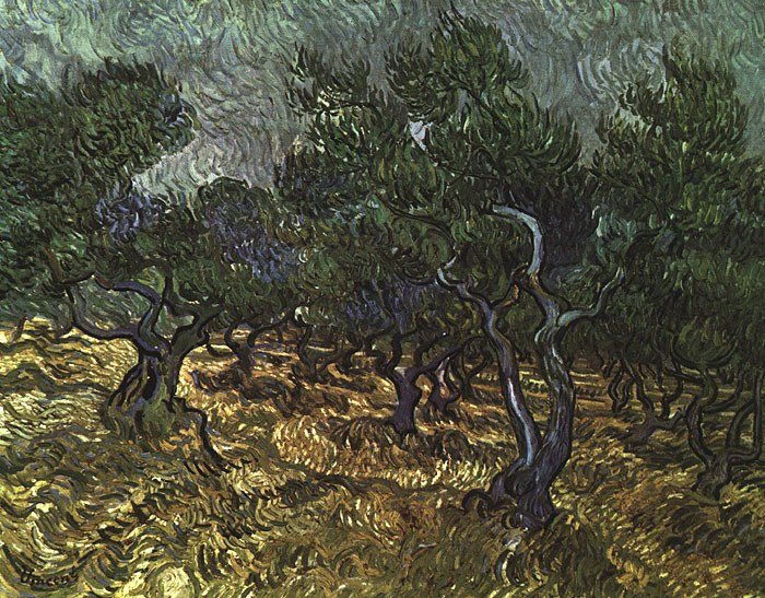 Vincent van Gogh The Olive Grove